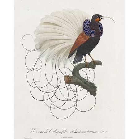 calligraphybird_450
